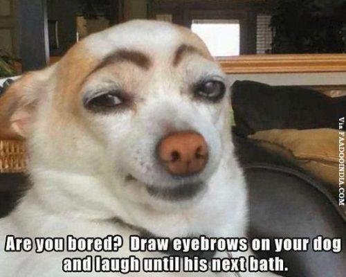 Funny meme eyebrows dog
