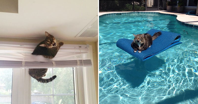 25 Times Cats Got Stuck In The Funniest Places