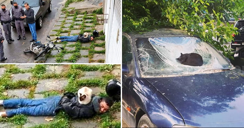 Funny Cats Chill In Places They Shouldn't