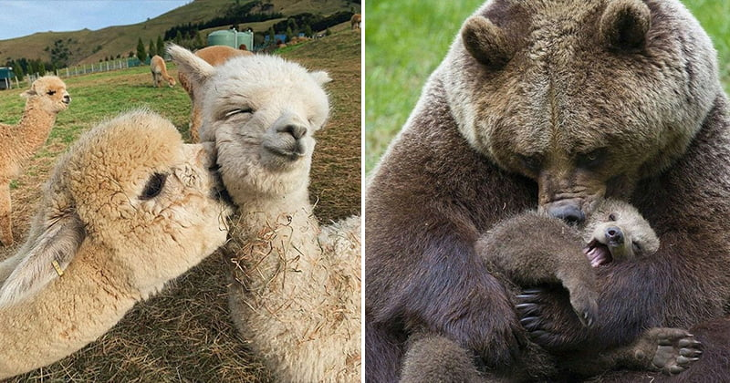 animal babies and mothers