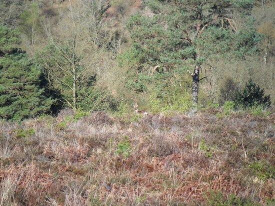 Hidden Camouflaged Animal Challenge