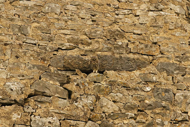 camouflaged owl - find the hidden animal photo riddle