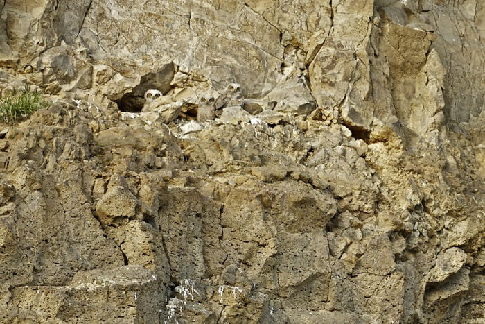 Find The Hidden Animal Riddle Camouflage Photo