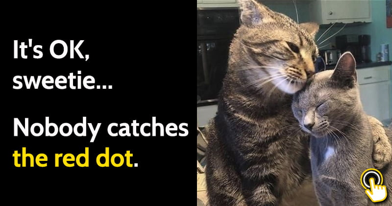 25 Funny Cat Memes That Will Make You Chuckle
