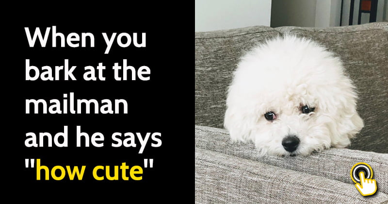 Hilarious Dog Memes