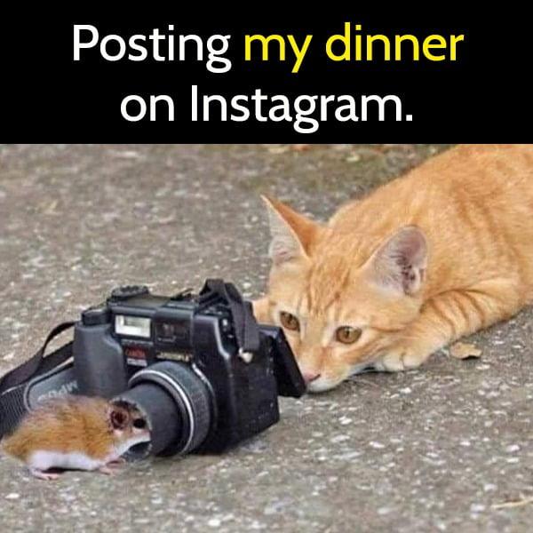 Posting my dinner on Instagram.