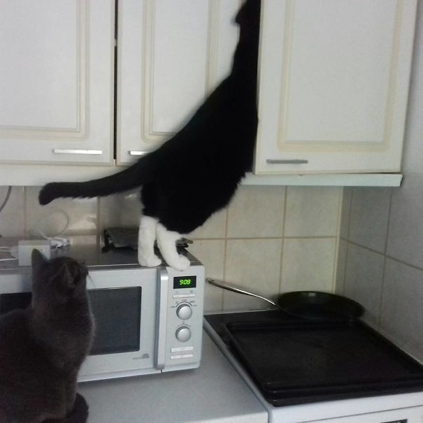 Funny animal thieves cat caught stealing