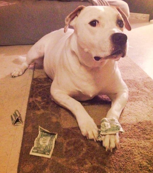 Funny animal thieves dog steals money