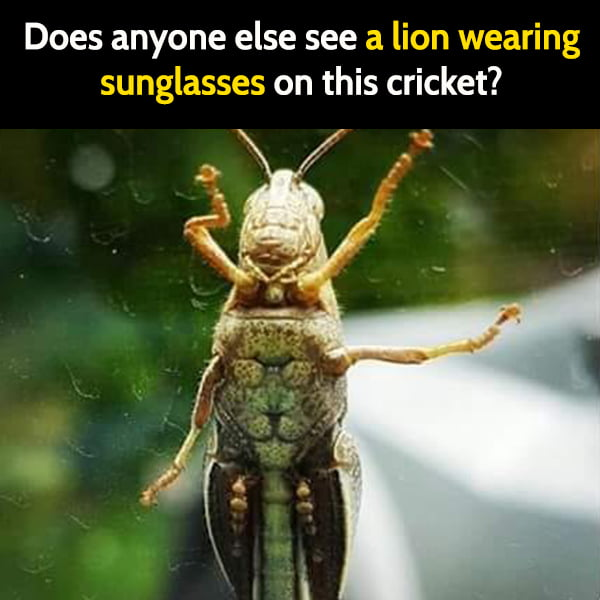 Funny meme June I may be high, but I see a lion wearing sunglasses on this cricket.