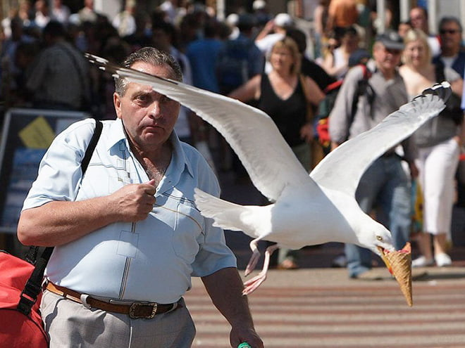 Funny animal thieves seagull steals ice cream