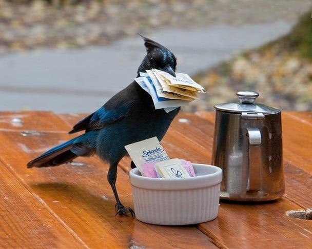 Funny animal thieves bird steals sugar packs
