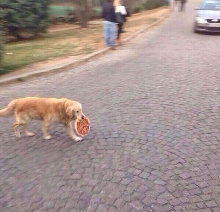 Funny animal thieves dog steals pizza