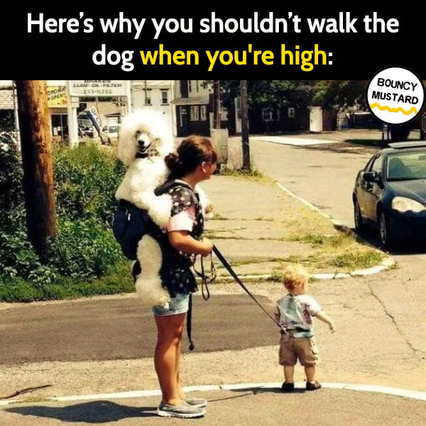 Funny meme June Walking the dog when you're high: