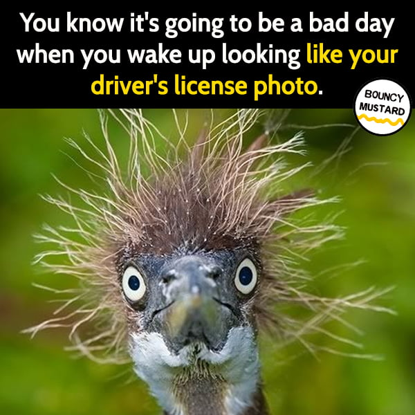 Funny meme June You know it's going to be a bad day when you wake up looking like your driver's license photo.