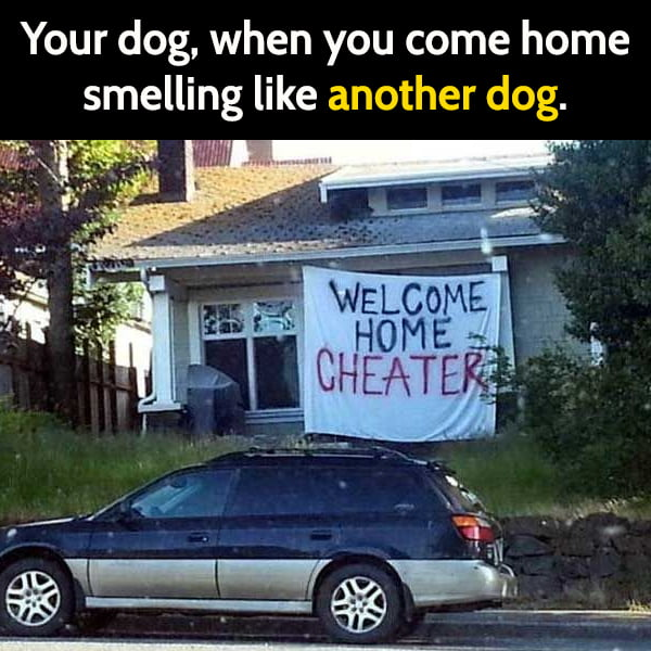 Funny meme June Your dog, when you come home smelling like another dog.