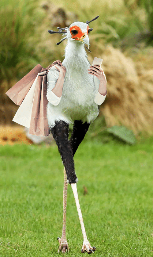 Funny bird with hands