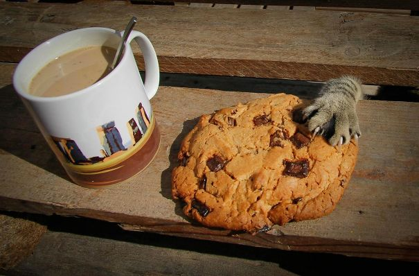 Funny animal thieves cat steals cookie