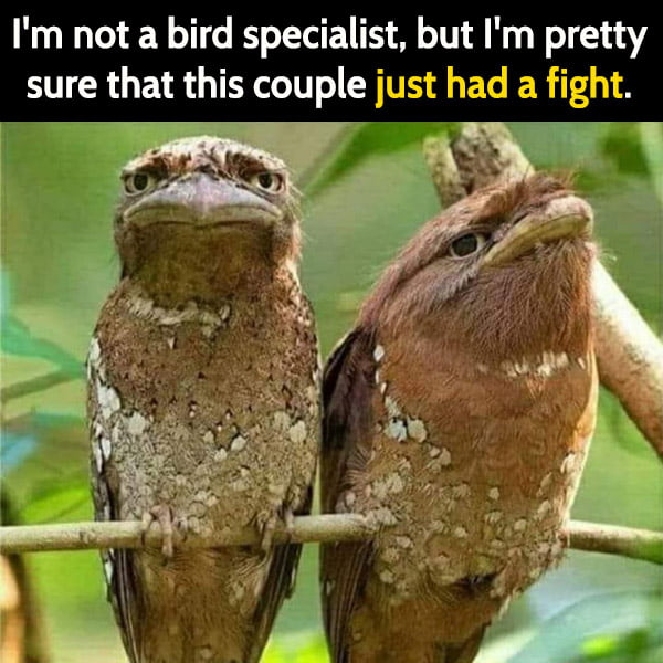 Funny meme June I'm not a bird specialist, but I'm pretty sure that this couple just had a fight.