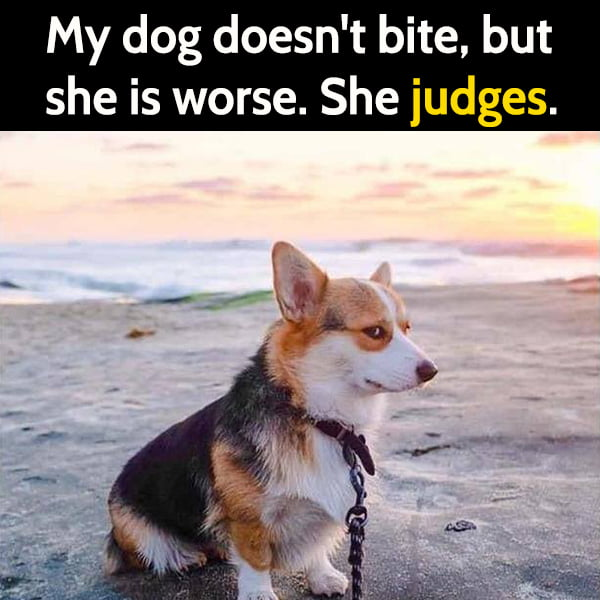 Funny random memes June My dog doesn't bite, she is worse. She judges.