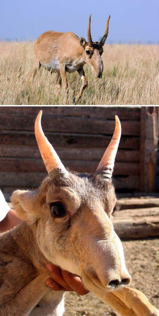 Interesting Creatures Around The World