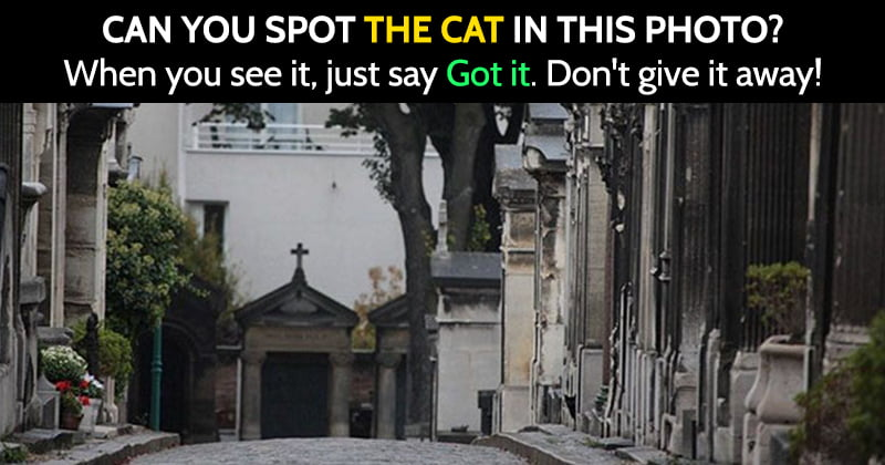 Find The Hidden Cat Riddle