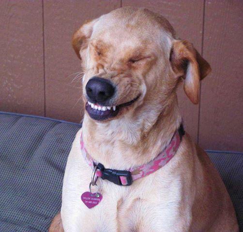 Funny dog mid-sneeze