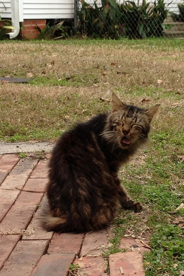Funny cat mid-sneeze