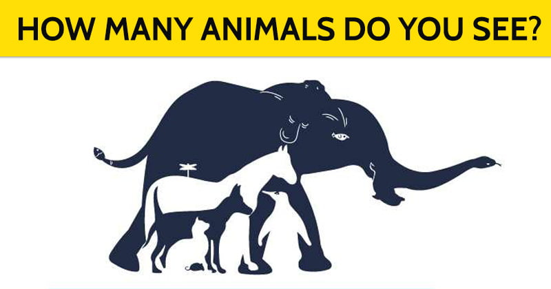 how many animals can you see hidden image riddle
