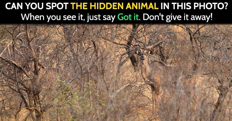 share hidden deer