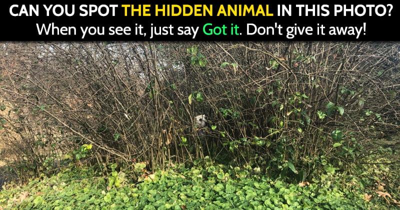 hidden animals image riddle