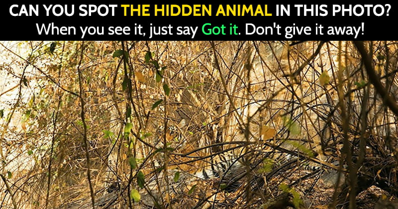Find the hidden animal riddle