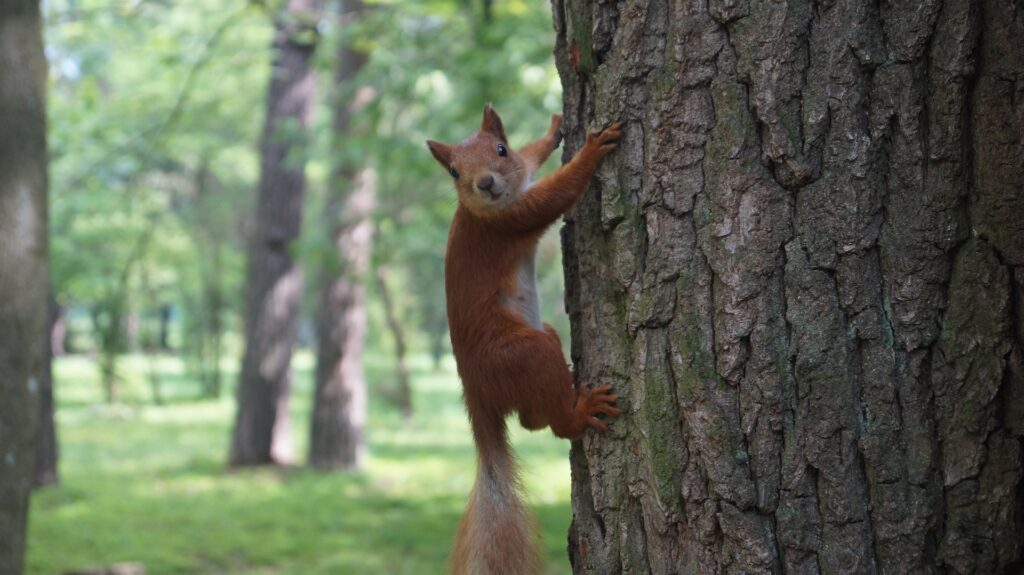 Funny squirrel photo