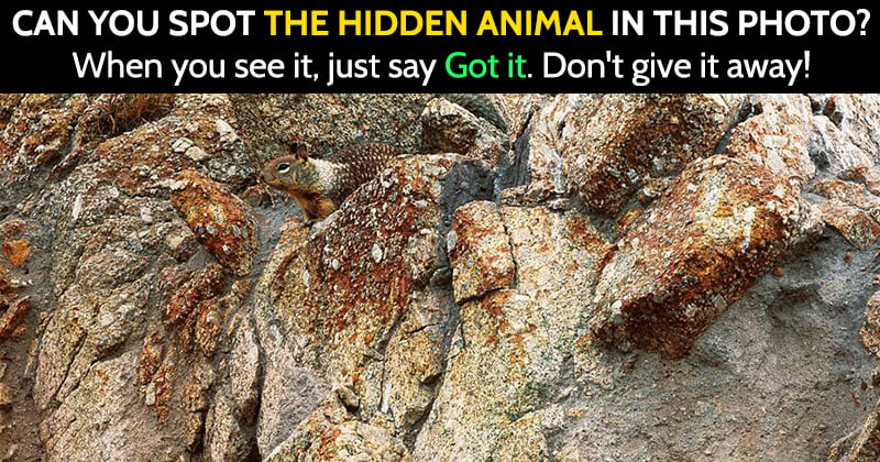 hidden image riddle