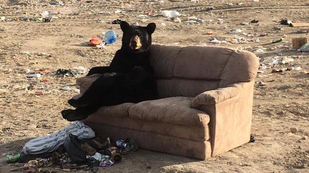 funny bear sits on sofa