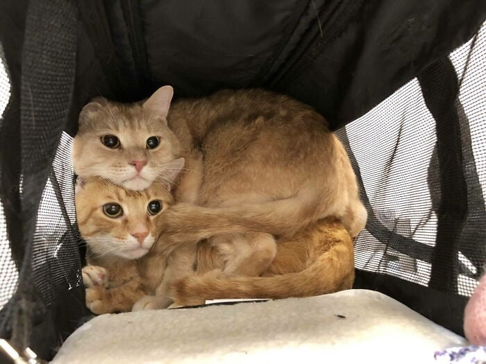 two funny cats on top of the other