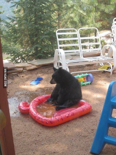 funny bear pool