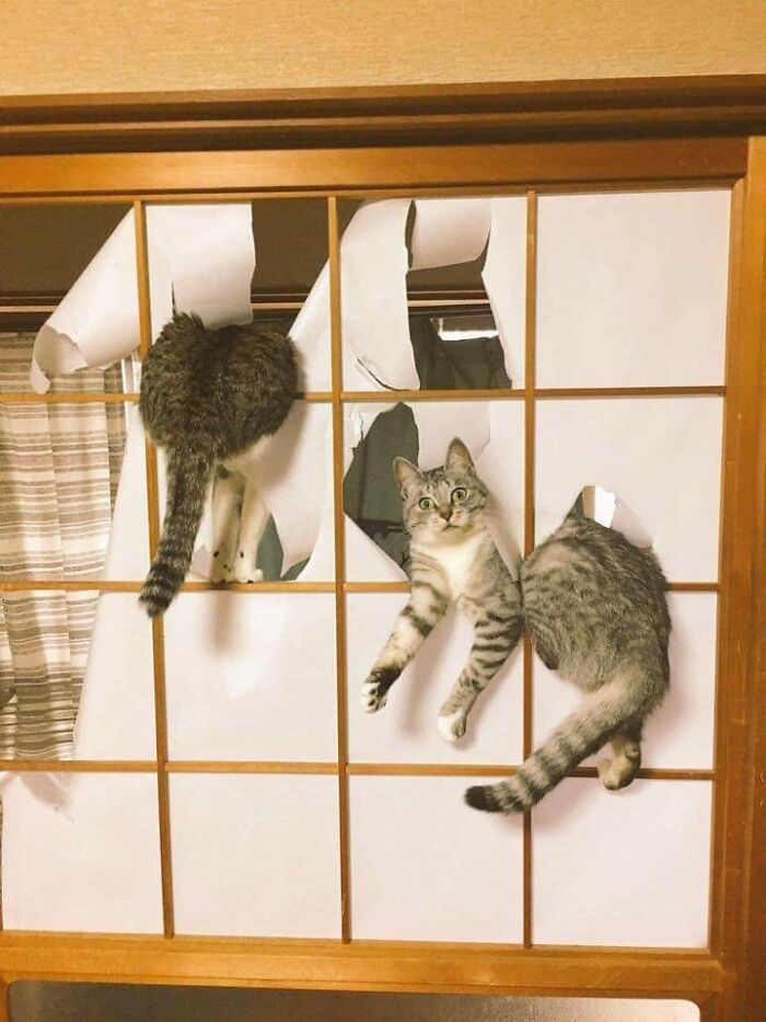 two funny cats get in trouble