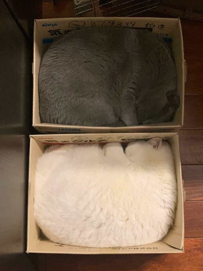 two funny cats in boxes