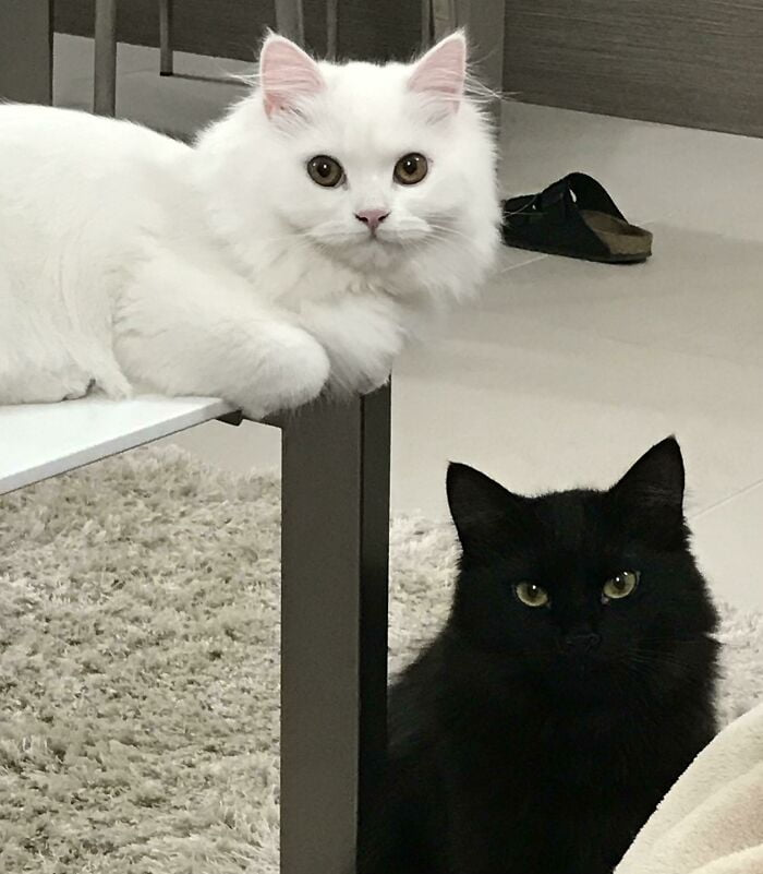 two funny cats black and white