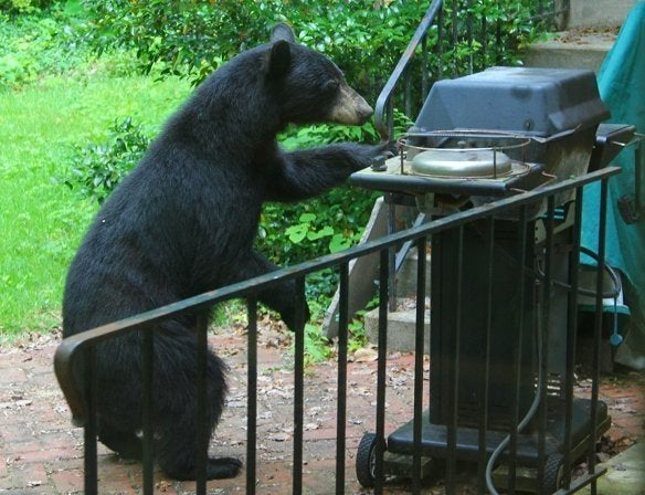 funny bear grills