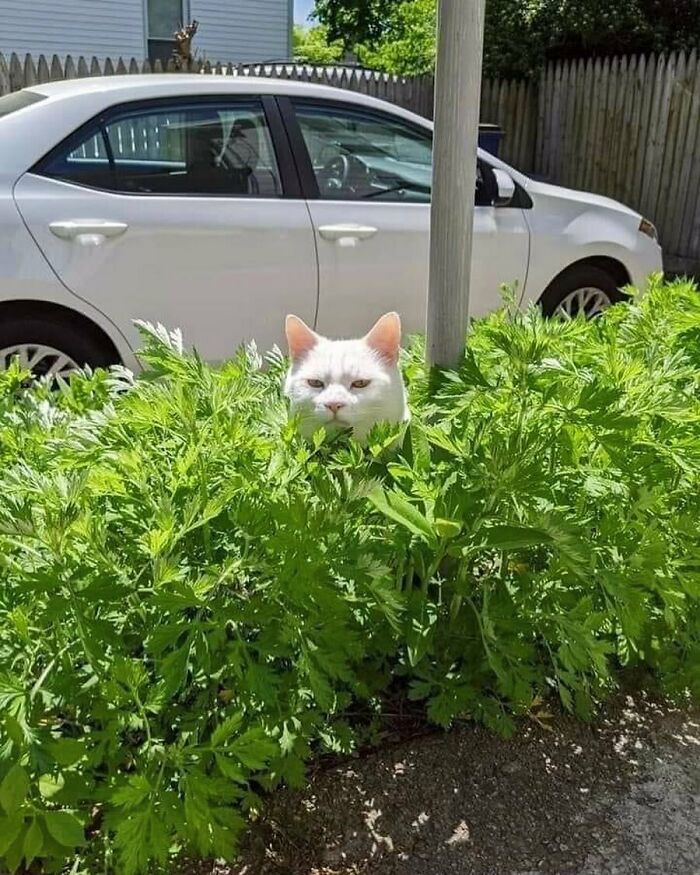funny animals doing funny things cat hides in bushes