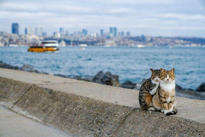 two funny cats hug