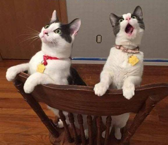 two funny cats surprise