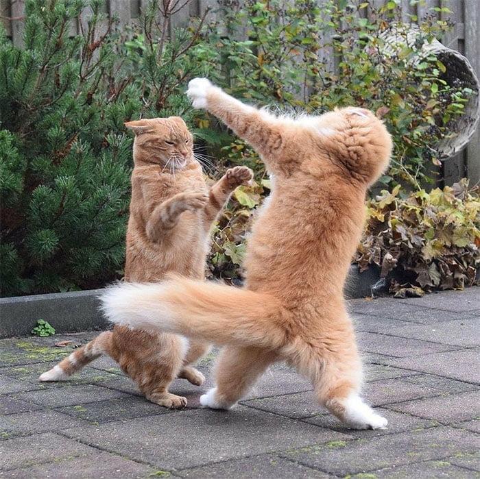 two funny cats ninja