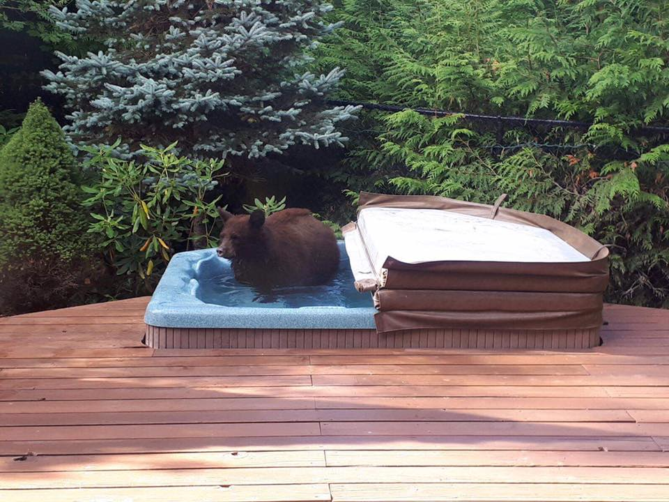 funny bear in jacuzzi