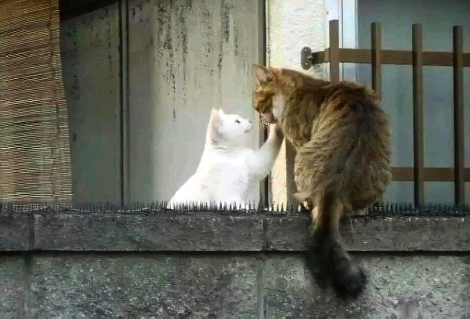 funny animals doing funny things cats in love