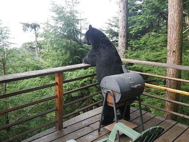 funny bear patio