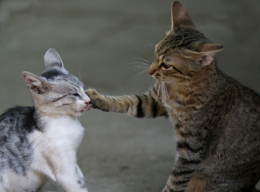 two funny cats playing