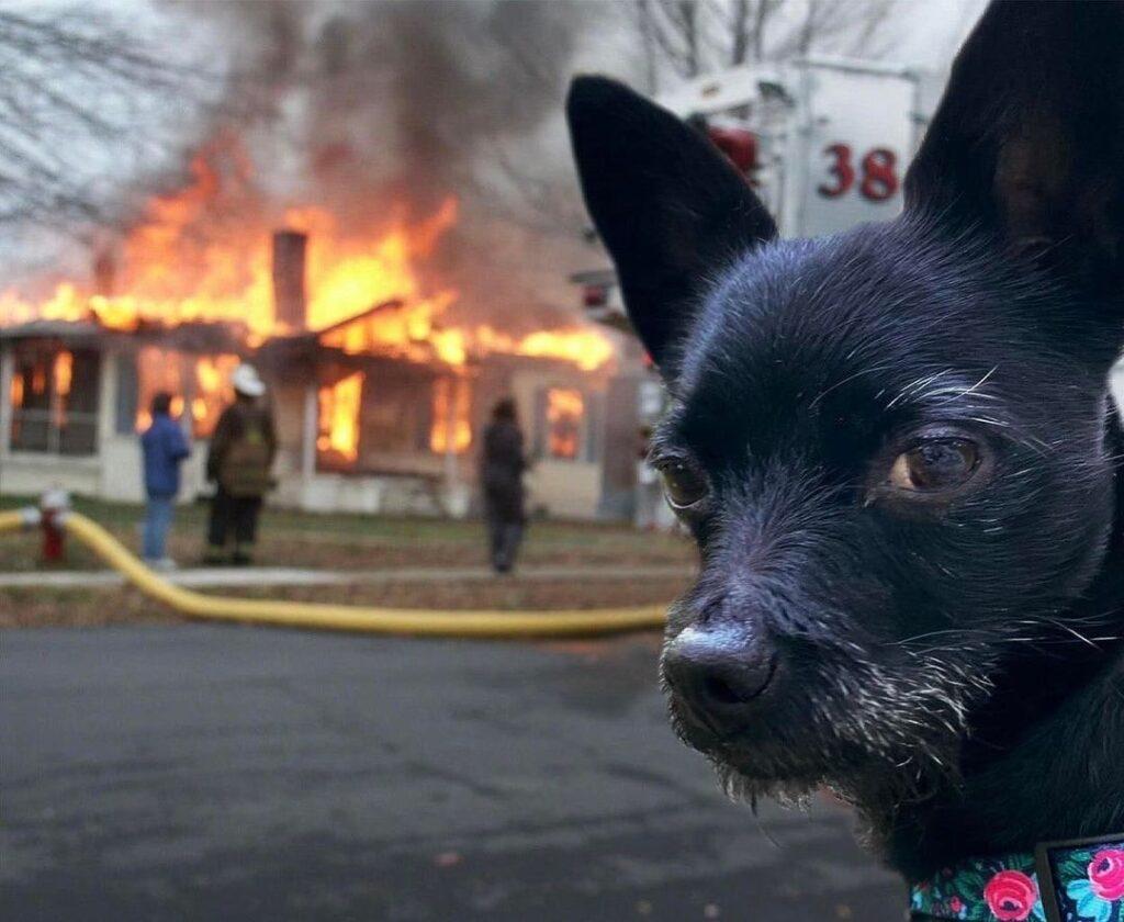 funny animals doing funny things dog burning house meme