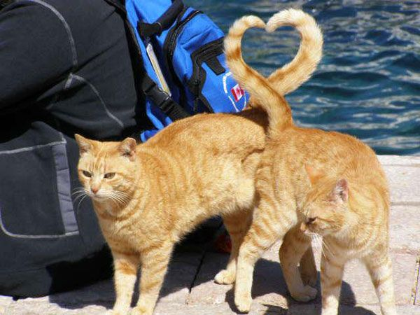 two funny cats tails shaped as heart